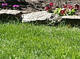 Rasen und Rasenpflege